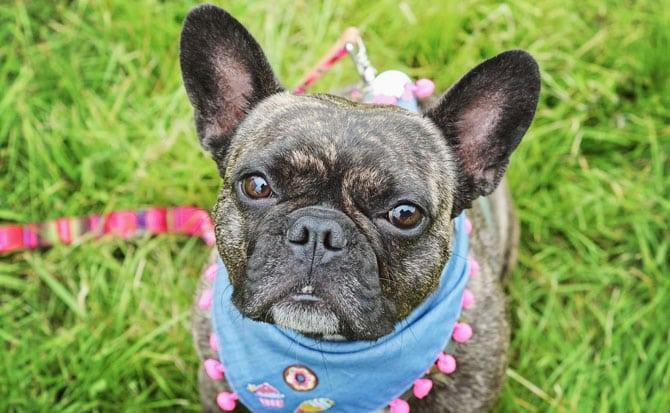 Mabel-Alfie