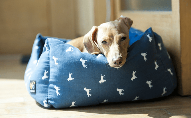 Dog Lifestyle Tips - Sleeping Dog